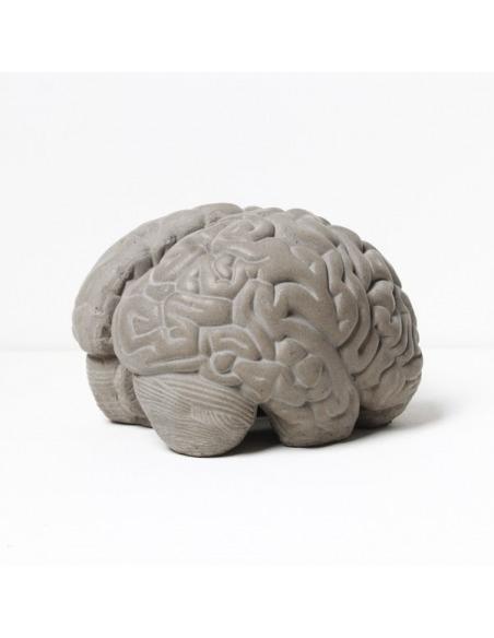 Cerveau Gray matters serre livres